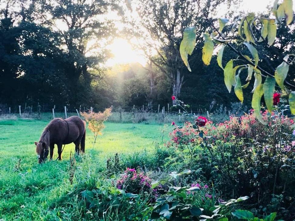 Dans un jardin d'un hectare